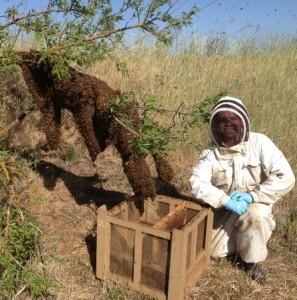 BeeSwarmInternet