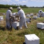 best bee pollination services united states api holdings