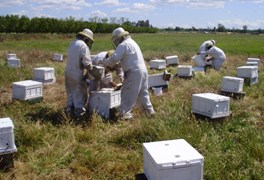 bee apiary operation API Holdings