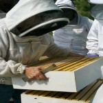 bee pollination services united states