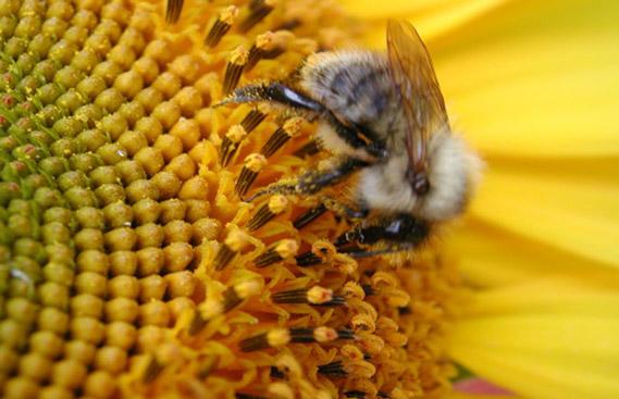 buy-queen-bees-online