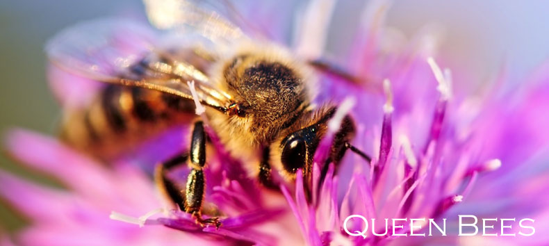 quality-queen-bees-api-holdings