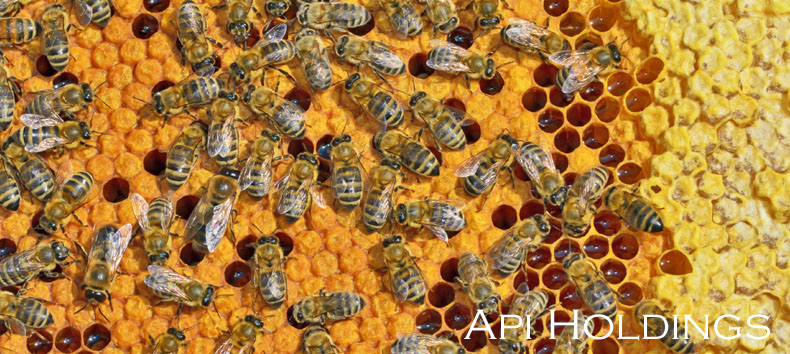 queen-bee-breeders-api-holdings